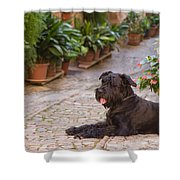 Big Black Schnauzer Dog In Italy Shower Curtain