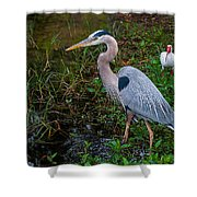 Big Blue And The Ibis Shower Curtain