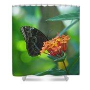 Big Boy Butterfly Shower Curtain