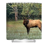 Big Boy Number Sixty-seven Another Year Older Shower Curtain