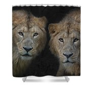 Big Brothers Shower Curtain