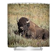 Big Buff - Bison - Buffalo - Yellowstone National Park - Wyoming Shower Curtain