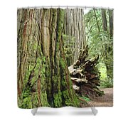 Big California Redwood Tree Forest Art Prints Shower Curtain