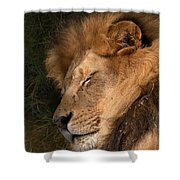 Big Cat Nap Shower Curtain