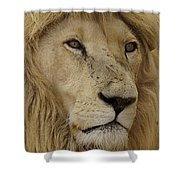 Big Cats 15 Shower Curtain