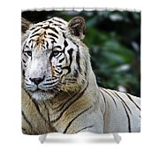 Big Cats 2 Shower Curtain
