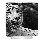 Big Cats 3 Shower Curtain