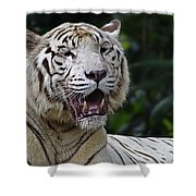 Big Cats 6 Shower Curtain