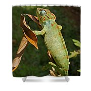 big chameleon of Madagascar 20 Shower Curtain