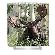 Big Daddy The Moose 3 Shower Curtain