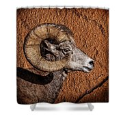 Big Horn Shower Curtain