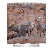Big Horn Group Pose Shower Curtain