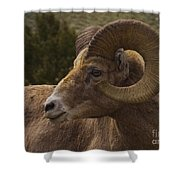 Big Horn Ram   #5098 Shower Curtain
