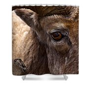 Big Horn Ram Shower Curtain
