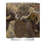 Big Horn Rams   #4989 - Signed Shower Curtain