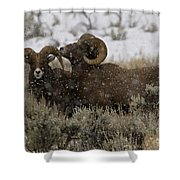 Big Horn Rams In Snow   #2484 Shower Curtain