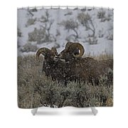 Big Horn Rams In The Snow   #2523 Shower Curtain
