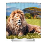 Big Lion Lying On Savannah Grass Shower Curtain