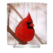 Big Red  Cardinal Bird In Snow Shower Curtain