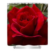 Big Red Rose Shower Curtain