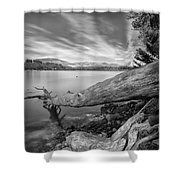 Big Roots Time Traces Shower Curtain