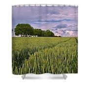 Big Sky Montana Wheat Field  Shower Curtain