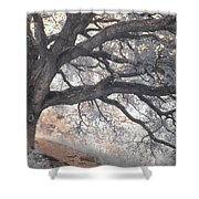 Big Sur Oak Shower Curtain