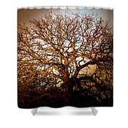 Big Tree Shower Curtain
