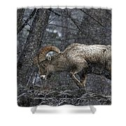 Bighorn Caught In A Blizzard Shower Curtain