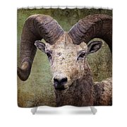 Bighorn Country Shower Curtain