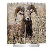 Bighorn Grassland Shower Curtain