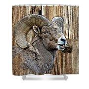 Bighorn Sheep Barnwood Shower Curtain