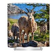 Bighorn Sheep Of Lake Minnewanka Shower Curtain