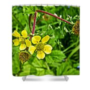 Bigleaf Avens Along Skunk Cabbage Trail In Mount Revelstoke National Park-british Columbia    Shower Curtain