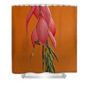 Bilbergia  Windii Blossom Shower Curtain