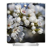 Billows Of Fluffy White Bradford Pear Blossoms Shower Curtain