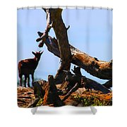 Billy The Goat Shower Curtain