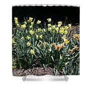 Biltmore Daffodils Shower Curtain