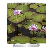 Biltmore Water Lillies Shower Curtain