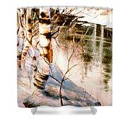Birch By Stream Shower Curtain