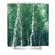 Birch Forest - Green Shower Curtain