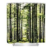 Birch Forest Fractal Shower Curtain