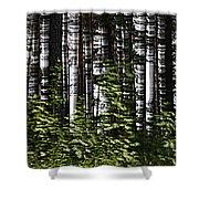 Birch Illusion Shower Curtain