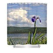 Birch Lake Iris Shower Curtain