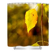 Birch Leaves Shower Curtain