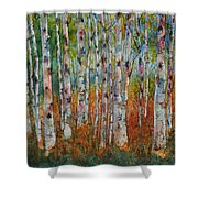 Birch Tranquility Shower Curtain