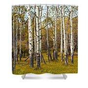Birch Tree Grove No. 0126 Shower Curtain