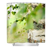 Birch Tree. The Soul Of Russian Nature Shower Curtain