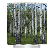 Birch Trees In A Grove No. 0148 Shower Curtain