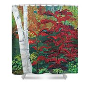 Birch Trees In Red Shower Curtain